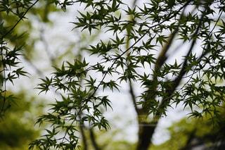木のクローズアップの写真・画像素材[2107242]