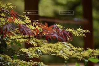 木の枝の上に腰掛けた鳥の接写の写真・画像素材[2107243]