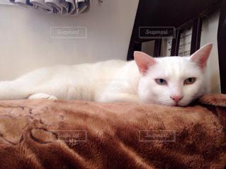 猫の写真・画像素材[415899]