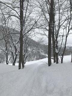 冬 - No.416993