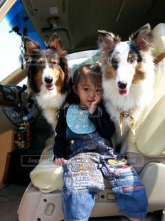 犬の写真・画像素材[416186]