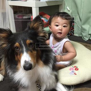 犬の写真・画像素材[416194]