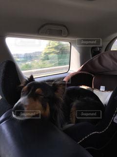 犬の写真・画像素材[416239]