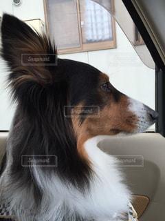 犬の写真・画像素材[416244]