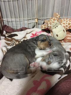 犬の写真・画像素材[543718]
