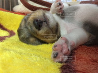 犬の写真・画像素材[543721]