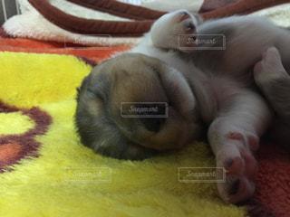 犬の写真・画像素材[543723]