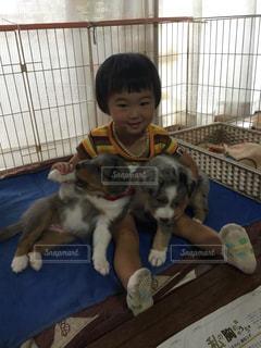 犬の写真・画像素材[592510]
