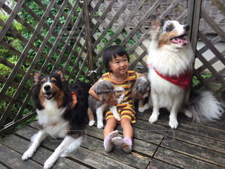 犬の写真・画像素材[592512]