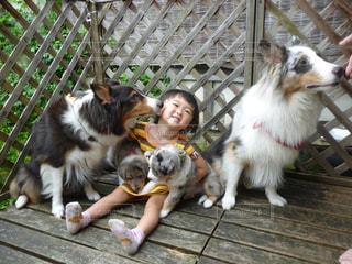 犬の写真・画像素材[592519]