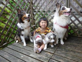 犬の写真・画像素材[592523]