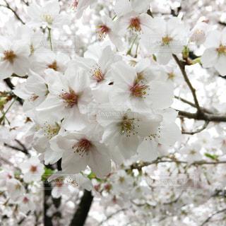 春 - No.429406