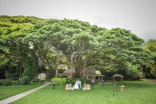 結婚式の写真・画像素材[416389]
