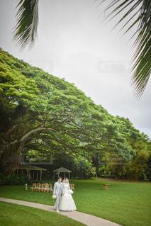 結婚式の写真・画像素材[416408]