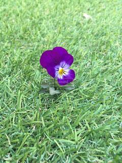 花の写真・画像素材[417281]