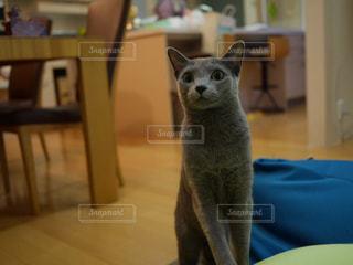 猫 - No.420373