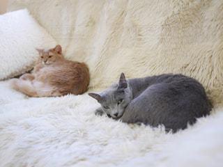 猫の写真・画像素材[420375]