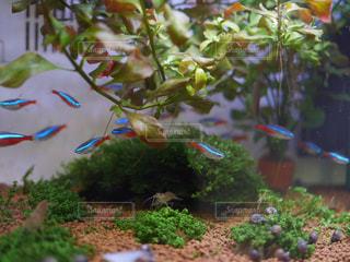 魚の写真・画像素材[420383]