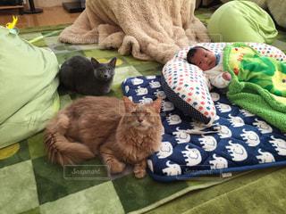 猫の写真・画像素材[425861]