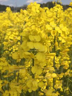 花の写真・画像素材[435146]