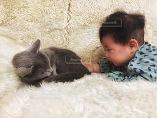 猫の写真・画像素材[453282]