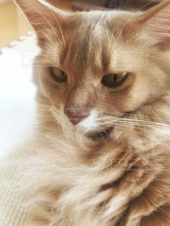 猫 - No.460051