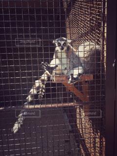 動物の写真・画像素材[461904]