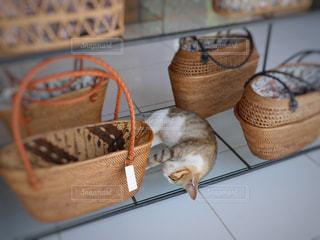 猫の写真・画像素材[507384]