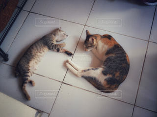 猫 - No.507386