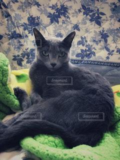 猫 - No.510678