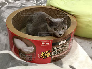 猫 - No.699367