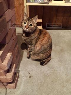 レンガとレンガ色の猫 - No.728606
