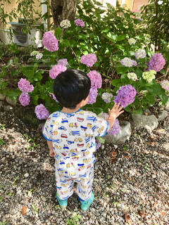 紫陽花とぼくの写真・画像素材[2253575]