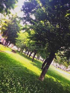 公園の写真・画像素材[417656]