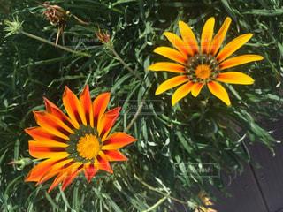 flowerの写真・画像素材[420249]