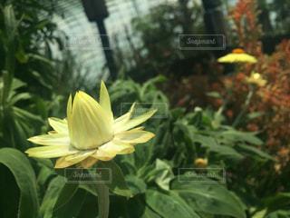 flowerの写真・画像素材[420250]