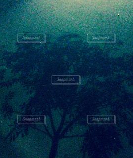木の写真・画像素材[417669]