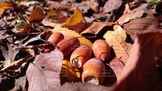 秋の写真・画像素材[417934]