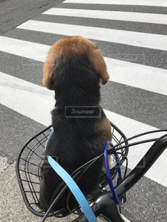 犬の写真・画像素材[427390]