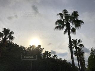 空の写真・画像素材[481559]