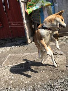 犬 - No.437596