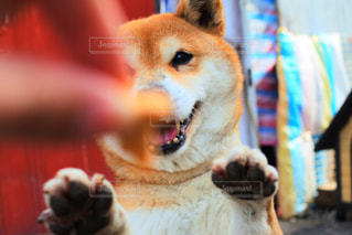 犬 - No.437600