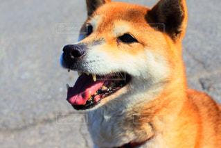犬 - No.445485