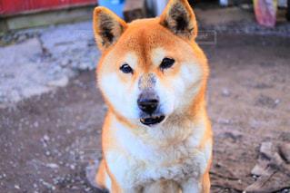 犬 - No.445487