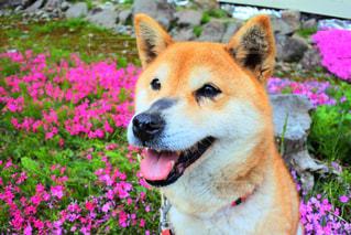 犬 - No.474600
