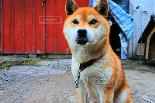 犬 - No.602445
