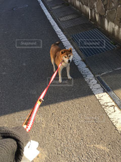 歩道の上を歩く犬の写真・画像素材[1622163]