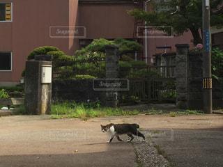 猫の写真・画像素材[419019]