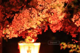 花 - No.435157