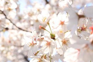 花の写真・画像素材[435159]
